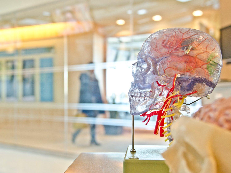 A Skeleton image